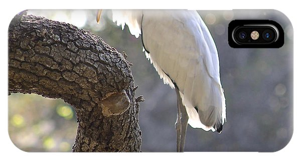 Wood Stork At Magnolia Cemetery    Tery IPhone Case