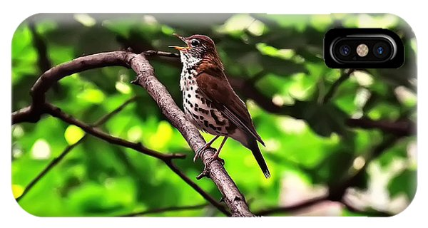 Wood Thrush Singing IPhone Case