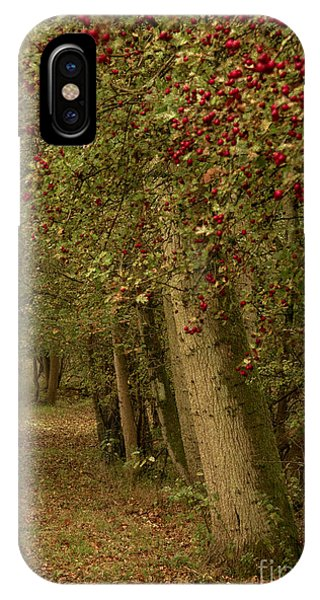 Woodland In Autumn IPhone Case