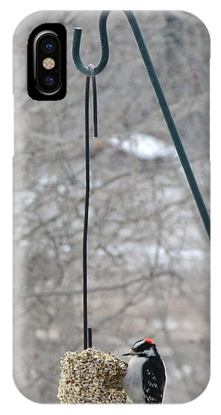 Woodpecker And Chickadee IPhone Case