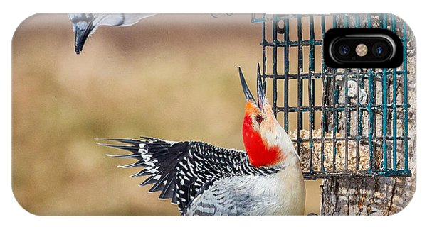Woodpeckers And Blue Jays Square IPhone Case