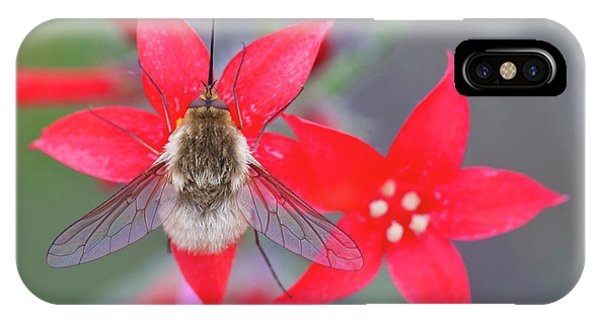 Scarlet iPhone Case - Wyoming, Sublette County, Bee Fly by Elizabeth Boehm
