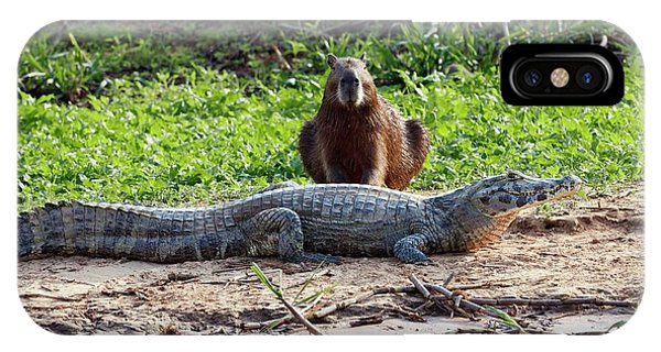 Crocodile iPhone Case - Yacare Caiman And Capybara by John Devries/science Photo Library