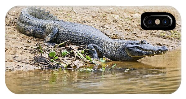 Crocodile iPhone Case - Yacare Caiman On A Riverbank by John Devries/science Photo Library