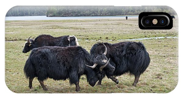 Yaks Fighting In Potatso National Park IPhone Case