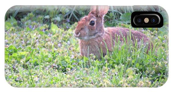 Yard Bunny 1 IPhone Case