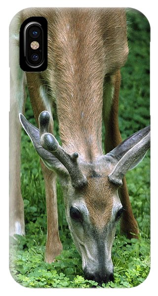 Yearling Buck In The Clover IPhone Case
