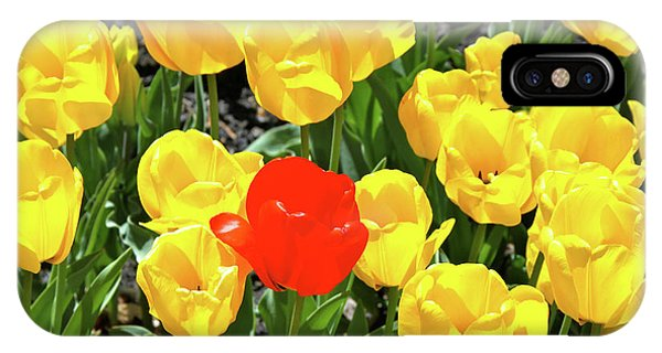 Yellow And One Red Tulip IPhone Case