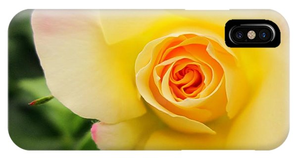 Yellow And Pink Beauty  IPhone Case