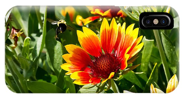 Yellow And Red Gaillardias And Bee IPhone Case