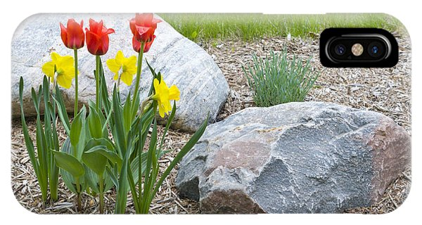 Yellow And Red Tulips With Two Rocks IPhone Case