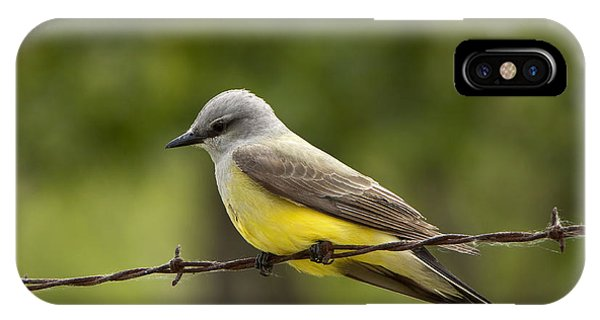 Yellow-bellied Fence-sitter IPhone Case