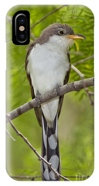 Cuckoo iPhone Case - Yellow-billed Cuckoo by Anthony Mercieca