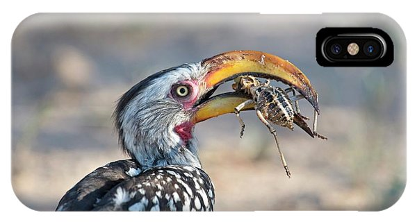 Yellow-billed Hornbill Eating A Cricket IPhone Case