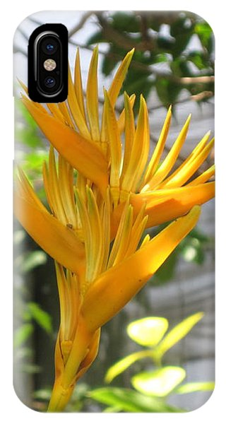 Yellow Bird Of Paradise IPhone Case