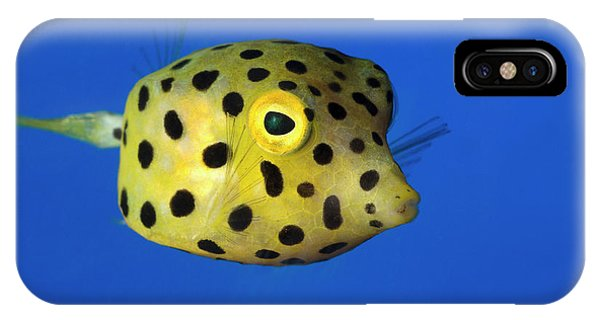 Ichthyology iPhone Case - Yellow Boxfish by Nigel Downer