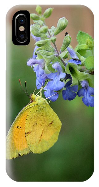 Yellow Butterfly On Blue Sage IPhone Case
