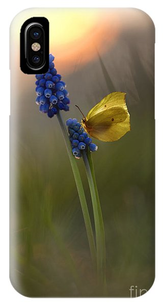 Yellow Butterfly On Grape Hyacinths IPhone Case