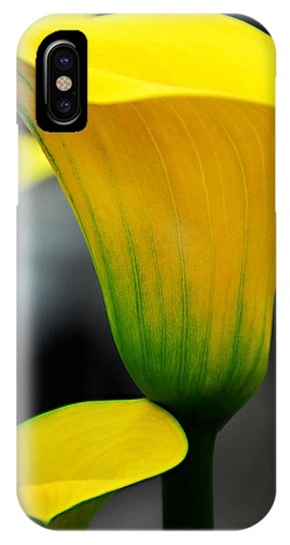 Yellow Calla Lily IPhone Case