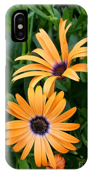 Yellow Cape Daisy IPhone Case