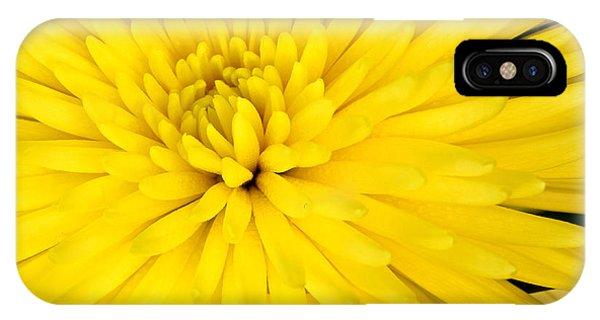 Yellow Chrysanthemum IPhone Case
