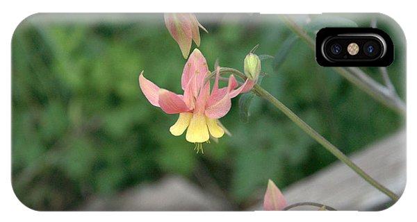 Yellow Columbine 2 IPhone Case