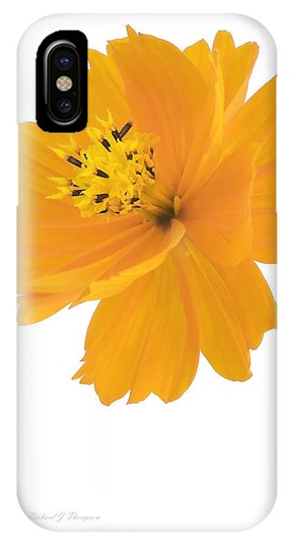 Yellow Coreopsis IPhone Case