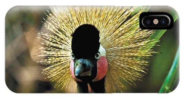 Yellow-crowned Crane Headshot Portrait IPhone Case