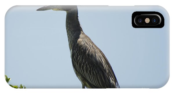 Yellow-crowned Night-heron IPhone Case
