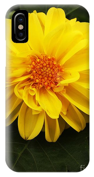 Yellow Dahlias IPhone Case
