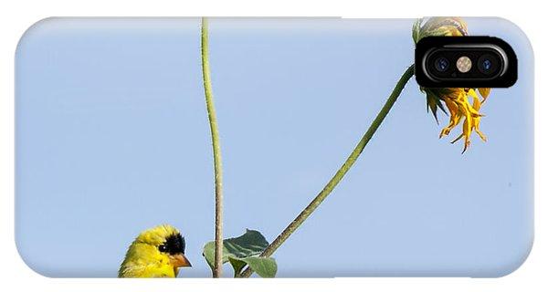 Yellow Delight 2 IPhone Case