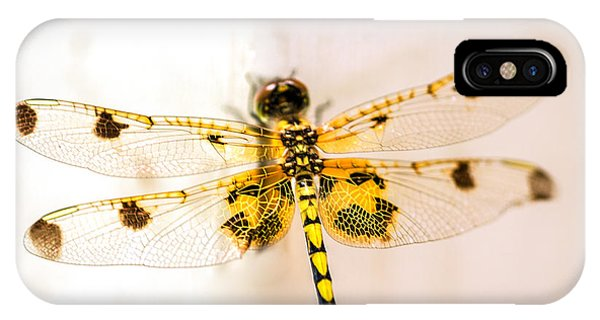 Dragon iPhone Case - Yellow Dragonfly Pantala Flavescens by Iris Richardson