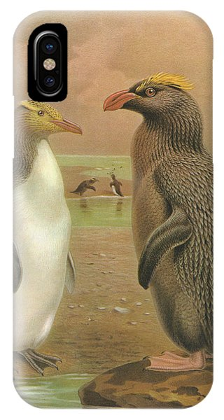Yellow Eyed Penguin And Snares Crested Penguin  IPhone Case
