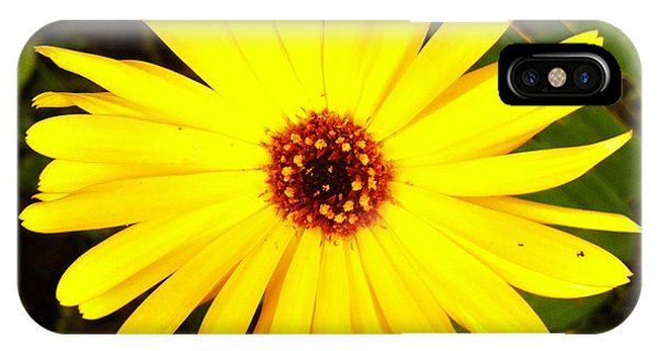 Yellow Flower 12 IPhone Case