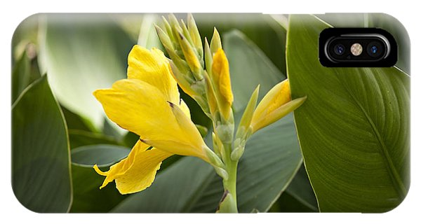Analogous Color iPhone Case - Yellow Flower by Lacie Oakey