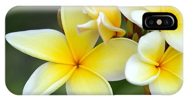 Yellow Frangipani Flowers IPhone Case