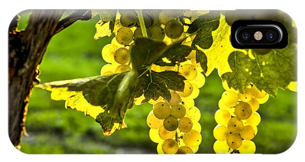 Sunny iPhone Case - Yellow Grapes In Sunshine by Elena Elisseeva