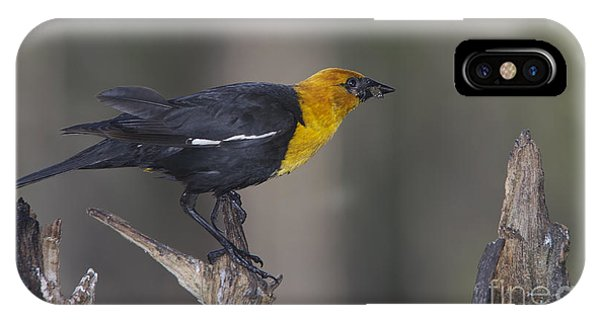 Yellow Headed Bird IPhone Case