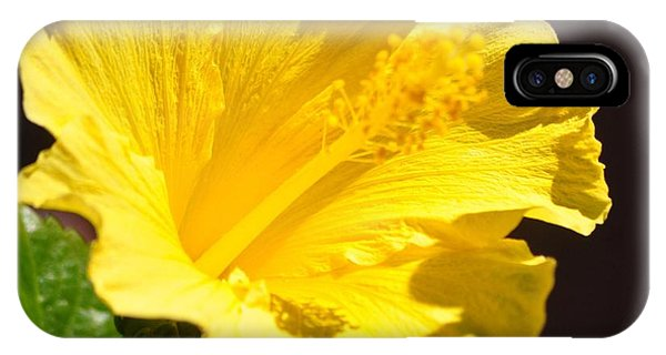 Yellow Hibiscus Open To The Sun IPhone Case