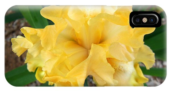 Yellow Iris Phone Case by Virginia Forbes