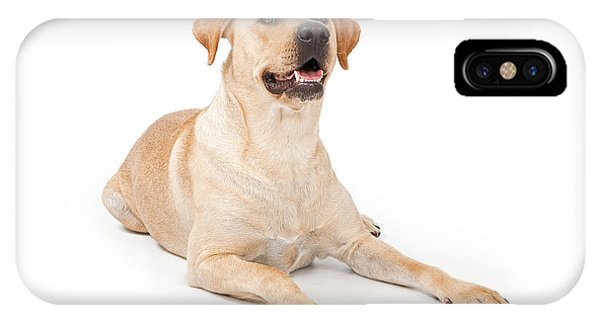 Yellow Lab iPhone Case - Yellow Lab Laying Down by Susan Schmitz