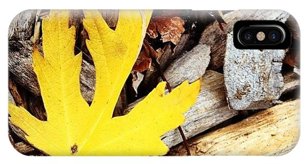 Color iPhone Case - Yellow Leaf by Christy Beckwith