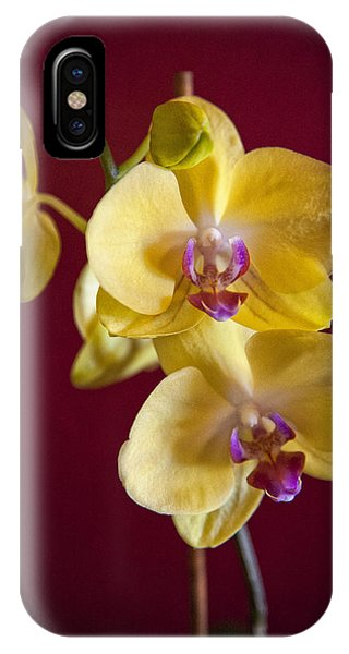 Yellow Orchid IPhone Case