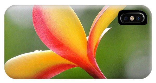 Yellow Pink Plumeria IPhone Case