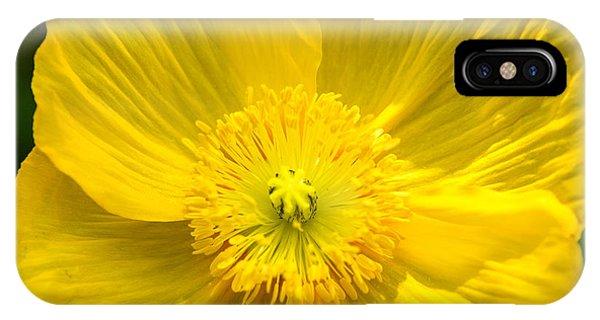 Yellow Poppy IPhone Case