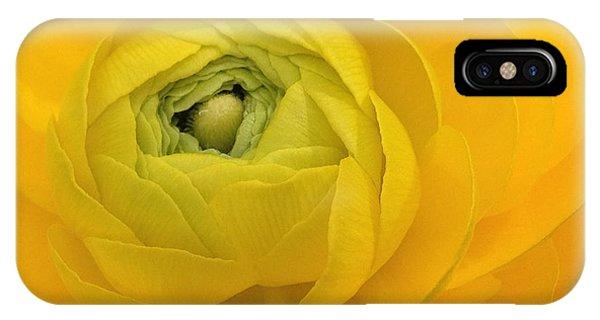 Yellow Ranunculus  IPhone Case