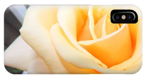 Yellow Rose And Trellis IPhone Case