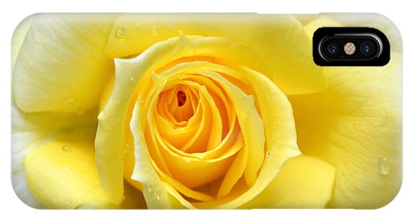 Yellow Rose L IPhone Case