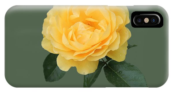 Yellow Rose Of Love IPhone Case