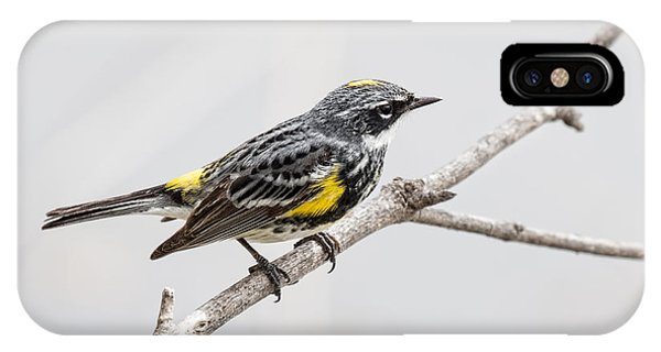 Yellow-rumped Warbler 3 Phone Case by Jeff Swanson